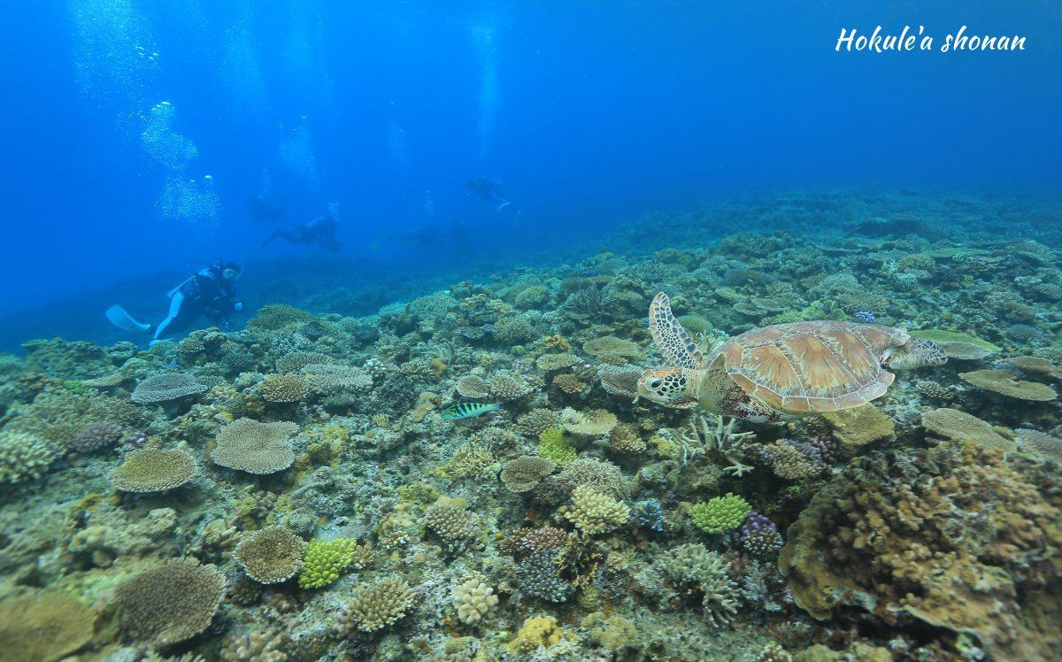 とかしき島のサンゴはすごい!!