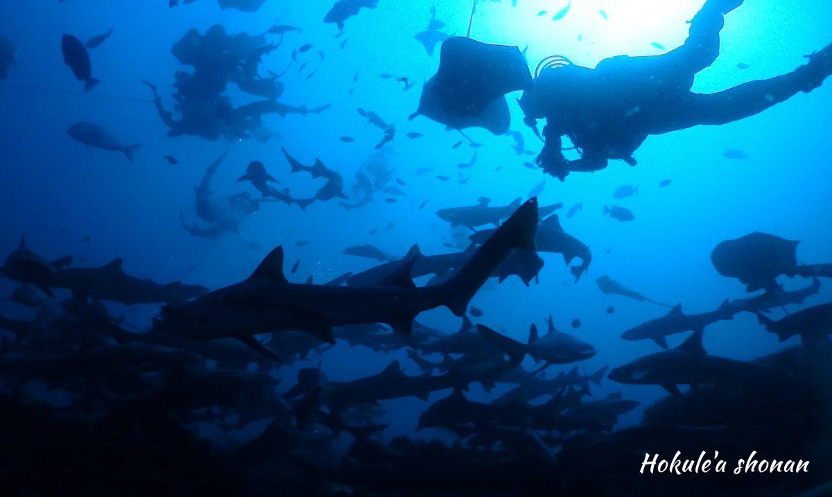 南房総・伊戸でサメとダイビング!