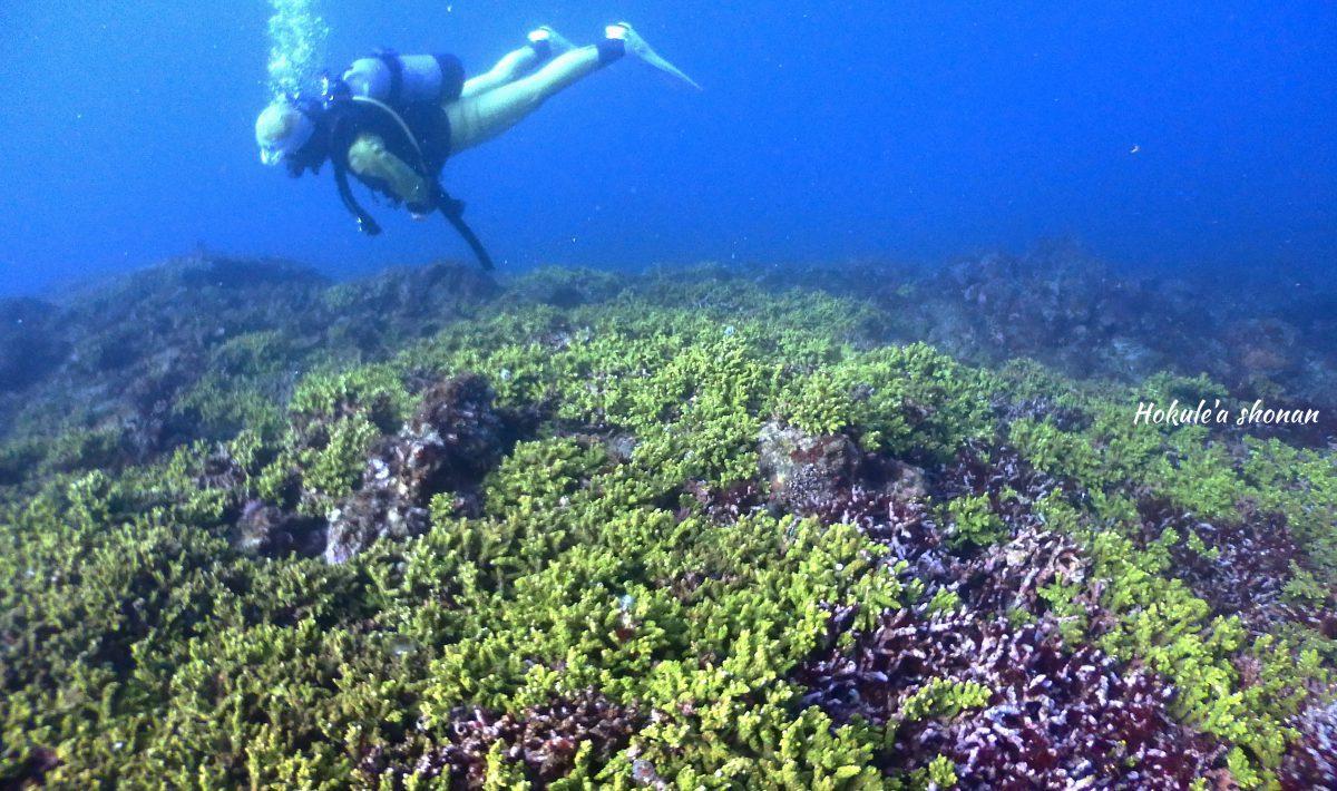 圧巻の造礁サンゴ!!