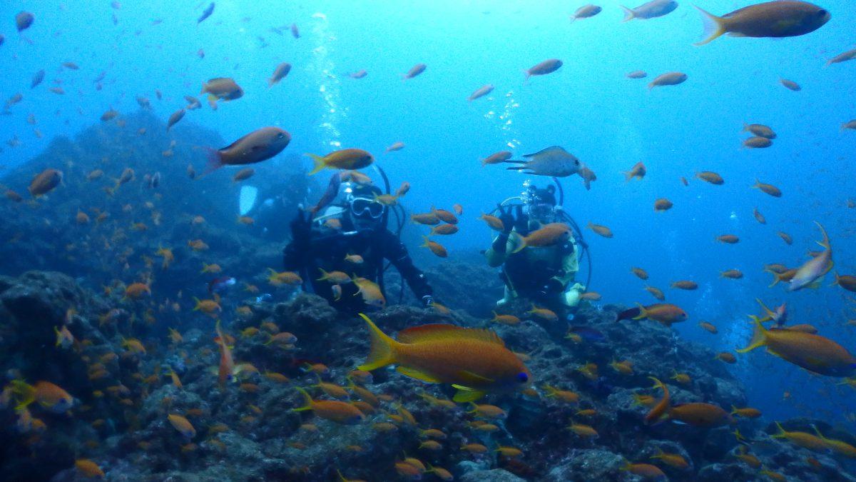 海の青と群れ