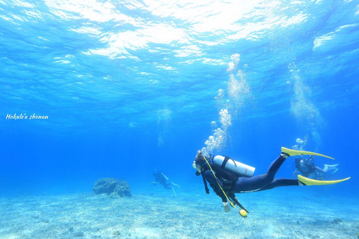 西表島 サンゴ