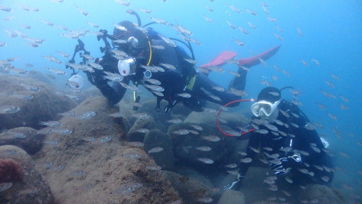 魚が群れ群れ