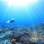 西表便りpart2〜やっぱりサンゴ礁が大好きだった〜