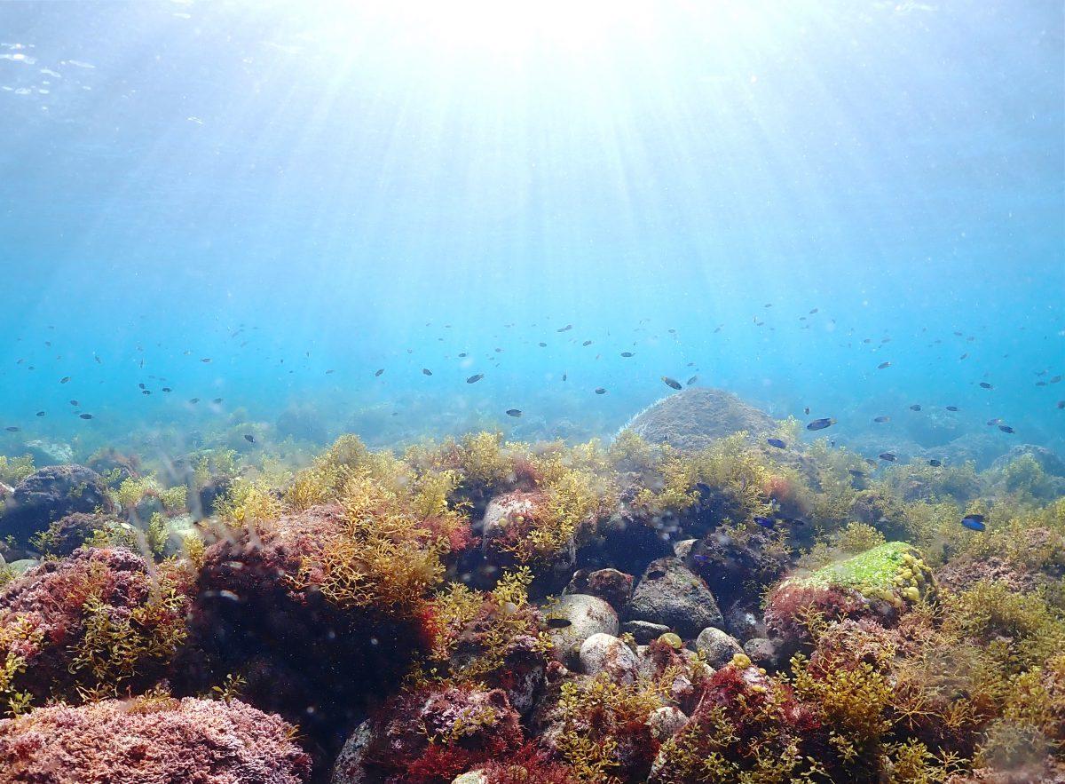 井田 海藻