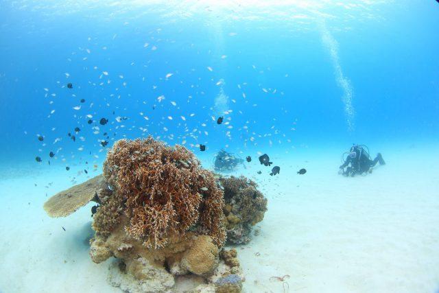 沖縄 サンゴ