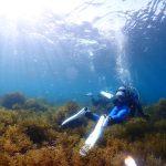 海藻ぐんぐん育つ🌴