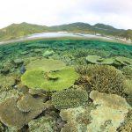 とかしき島ホエール&ダイビング